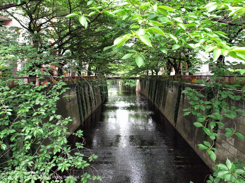 目黒川 - photo13
