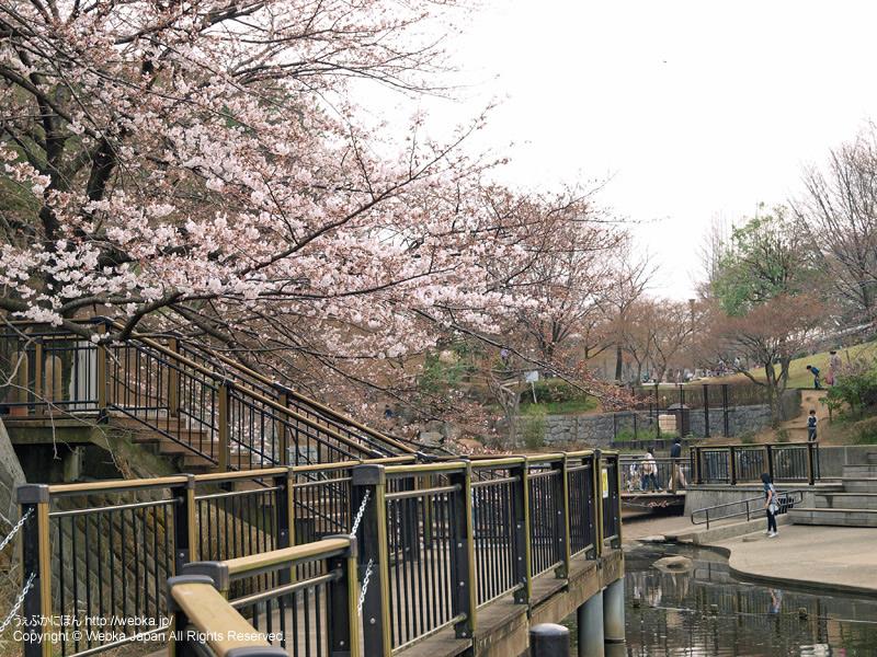岸根公園の桜 - photo14