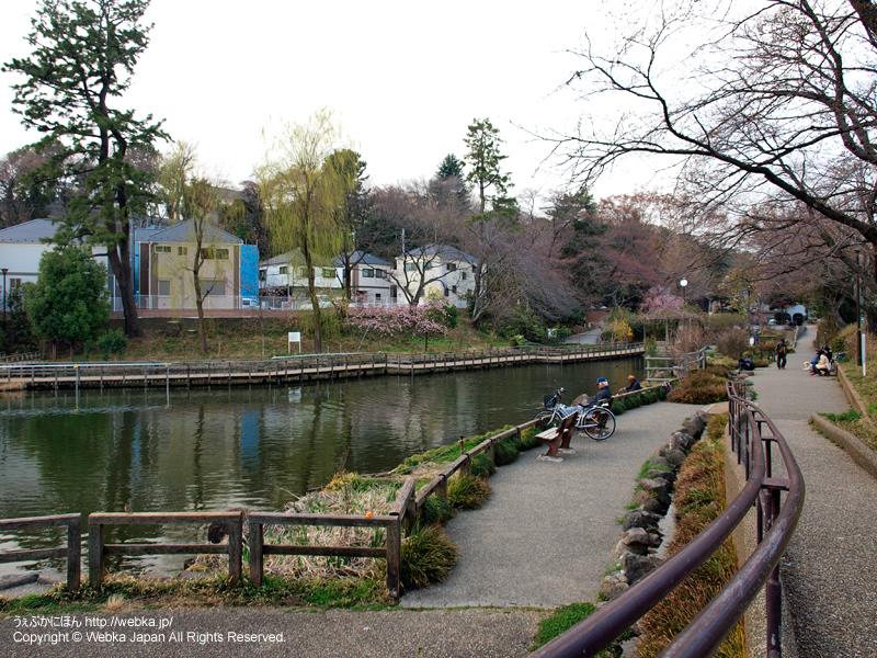 白幡池公園 - photo17