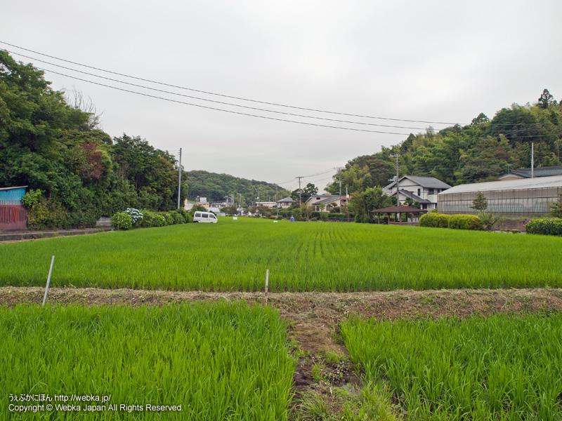 舞岡ふるさと村の田園風景 - photo14
