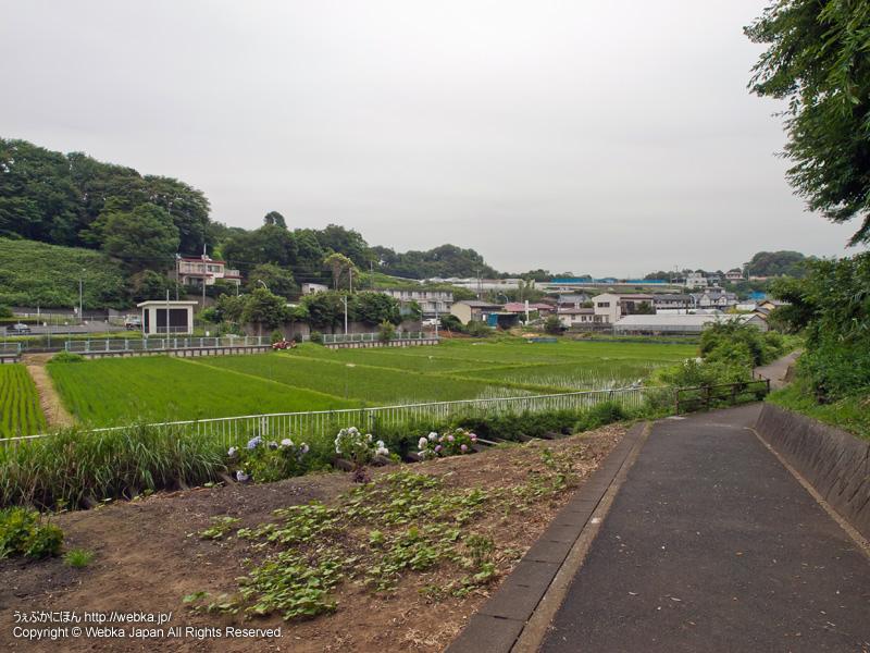 舞岡ふるさと村の田園風景 - photo16