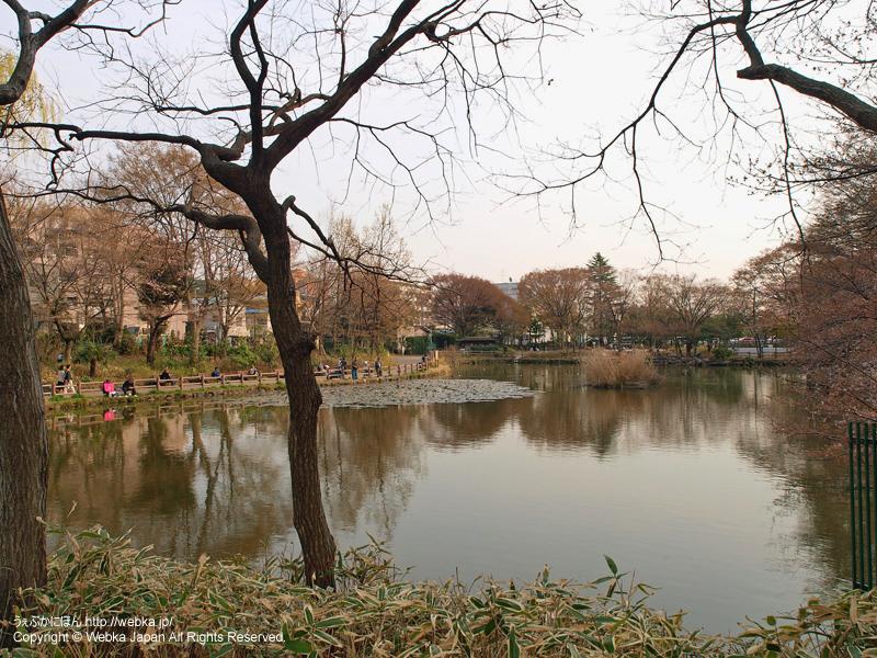 菊名池公園 - photo16