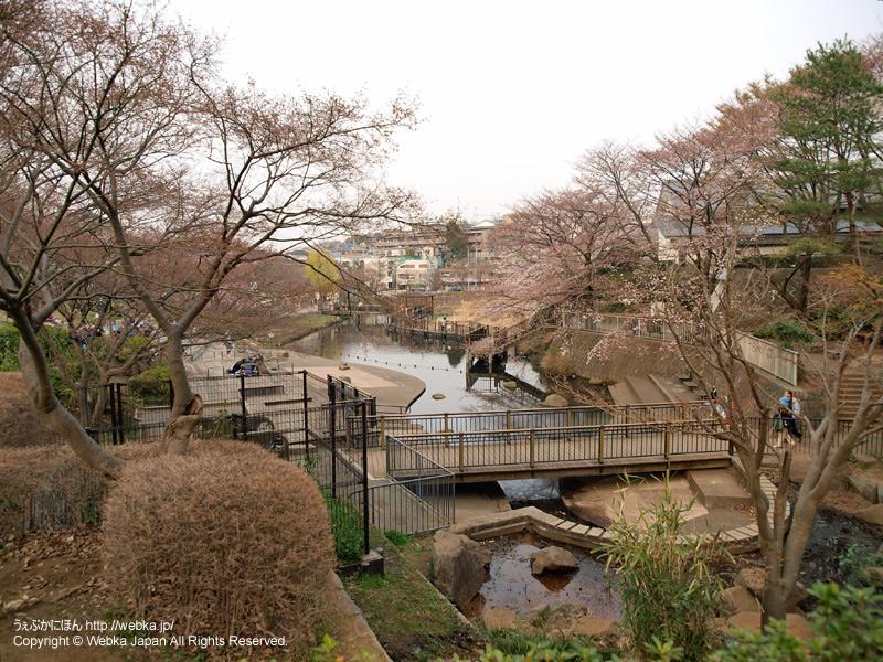岸根公園の画像5