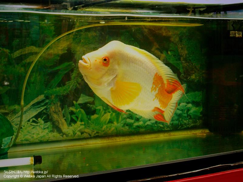 柿﨑水魚園の画像2