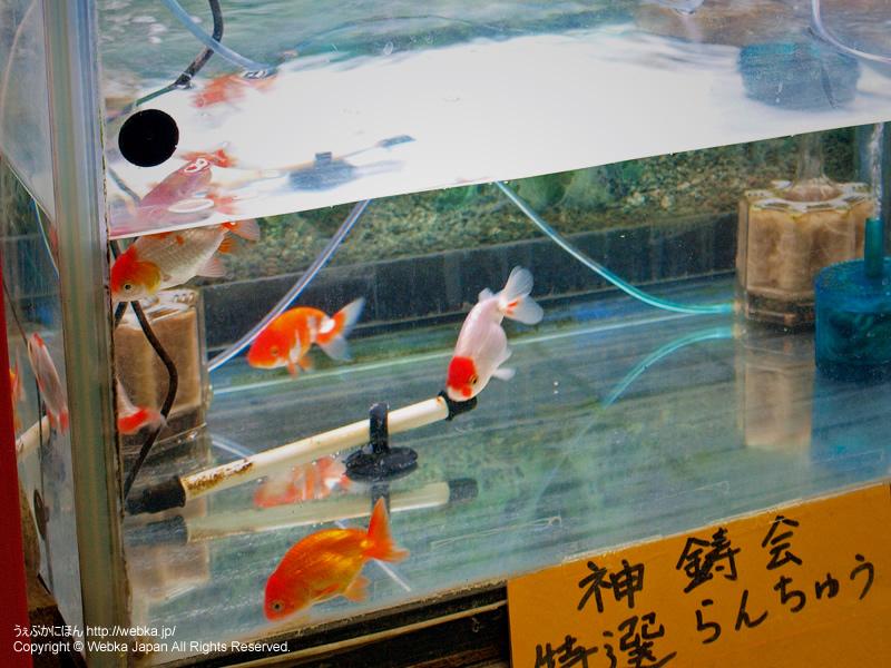 柿﨑水魚園の画像6