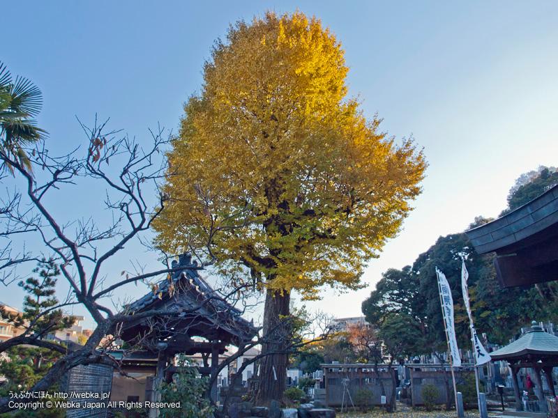 妙法寺の画像5