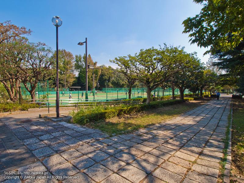 三ツ沢公園の画像5