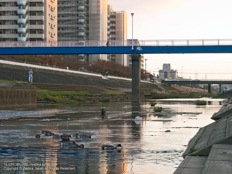 柏尾川プロムナードの画像4