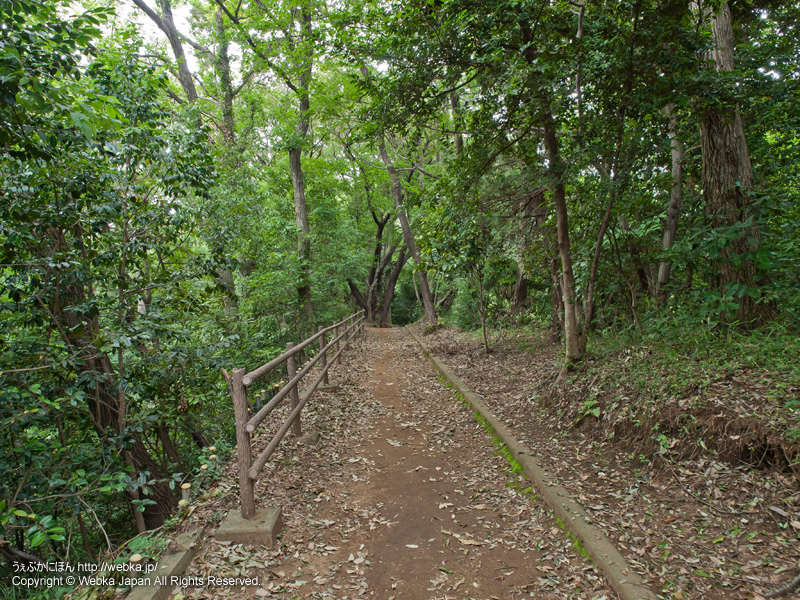 舞岡ふるさとの森の画像5