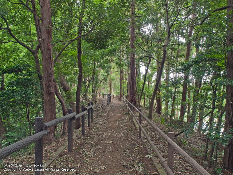 舞岡ふるさとの森の画像6