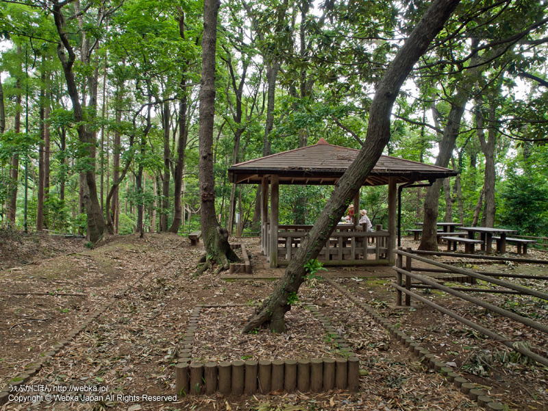 舞岡ふるさとの森の画像3
