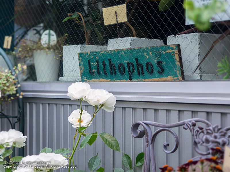 flowers Lithophos リトフォスの画像1