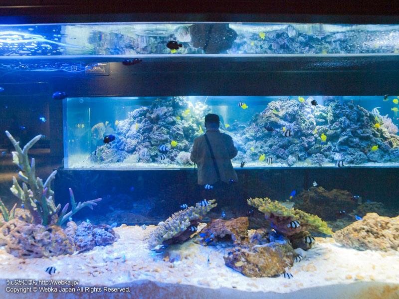 すみだ水族館 館内~サンゴ礁~