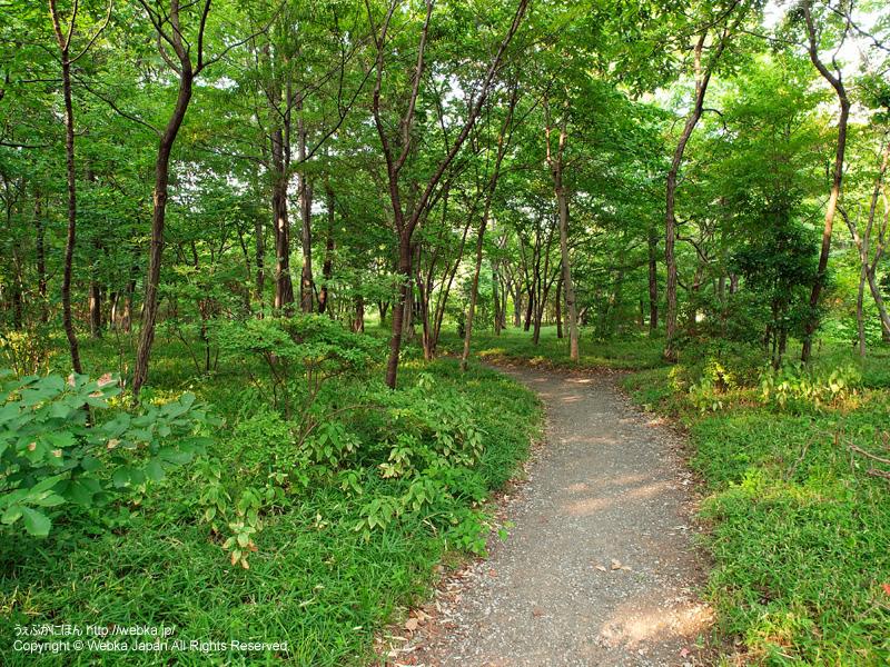皇居東御苑 二の丸雑木林