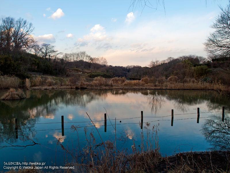 舞岡公園・さくらなみ池
