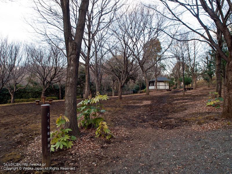 舞岡公園のさくら休憩所付近