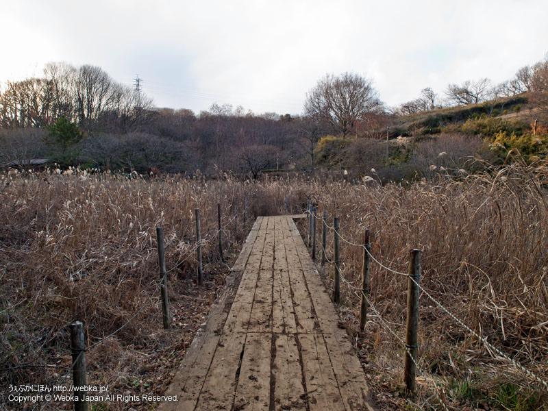 舞岡公園の木道