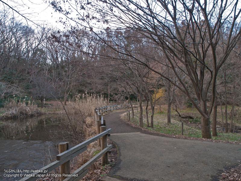 舞岡公園の瓜久保の池(カッパ池)