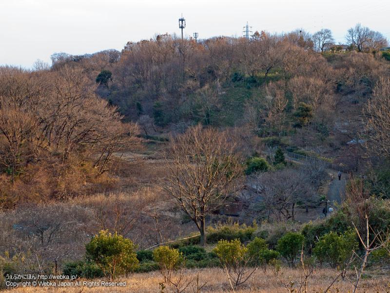 舞岡公園の谷戸の風景